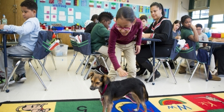 QUEENS, NEW YORK, NY - OCTOBER 27: Public School 97 (PS97) special needs students enjoy 'comfort dog' Juno, on October 27, 2017 in Queens, New York, New York. Juno is one of more than 30 dogs 'working' in the New York City public school system. The program, by the NY Department of Education, started last year in seven schools and has recently expanded to thirty more. All of the dogs are rescues from a local animal shelter. Each one is adopted by a member of their school's staff or administration. (Photo by Melanie Stetson Freeman/The Christian Science Monitor via Getty Images)